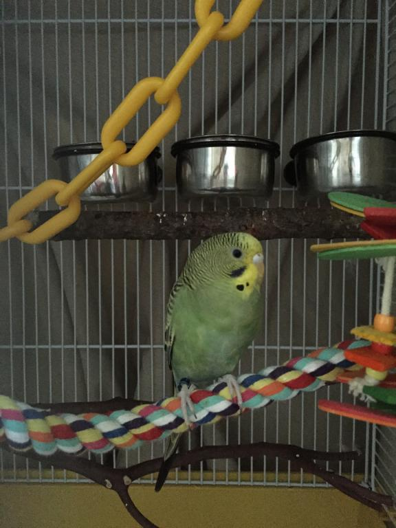 Say hello to my new addition :)-img_0004.jpg