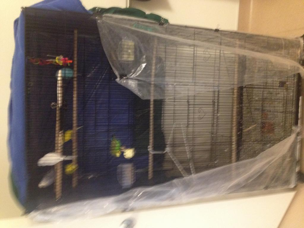 budgie backs butt up high against cage-img_0017.jpg