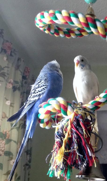 Charlie & Georgie friends-img_0178.jpg