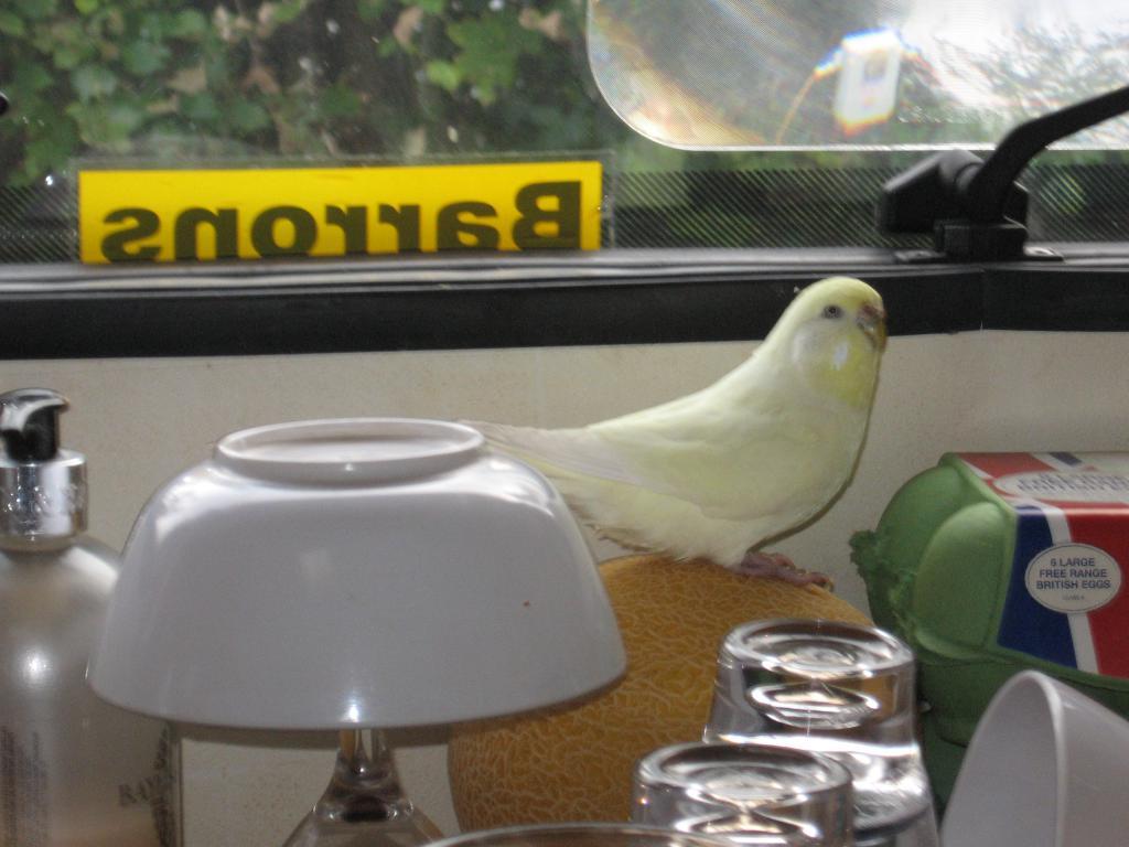 Digby exploring our Motorhome-img_0441.jpg