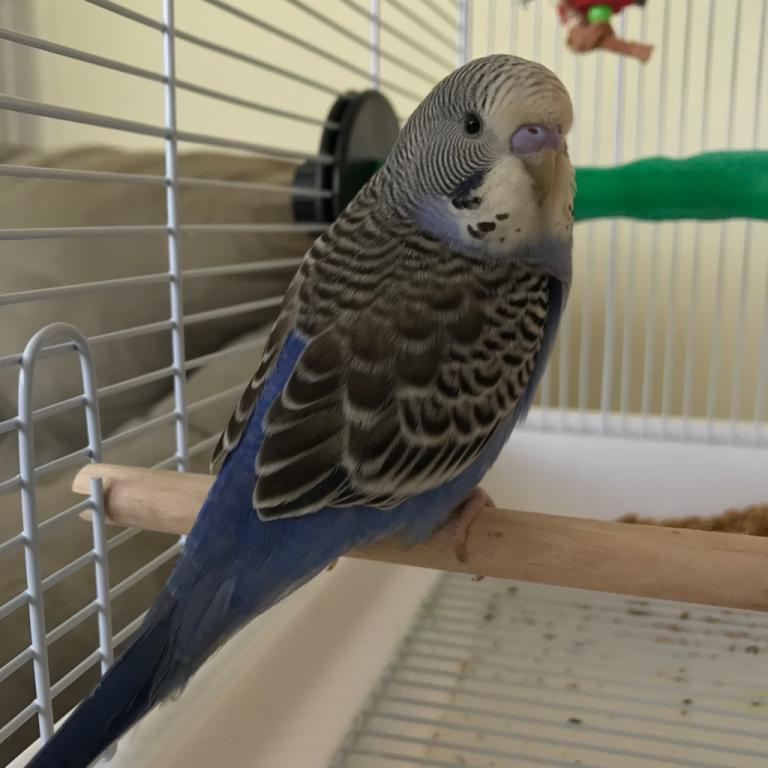 New young budgie-img_0508.jpg