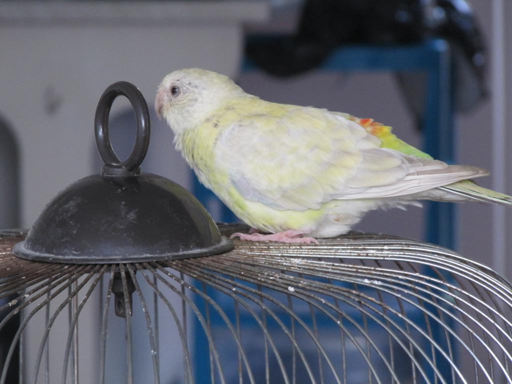 Getting two birds to get along-img_0612.jpg