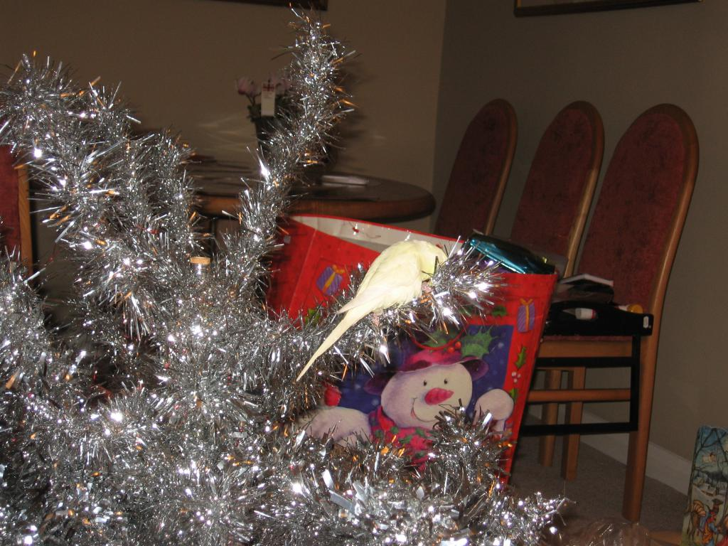 Holiday Festive Traditions Contest 2015-img_0663.jpg