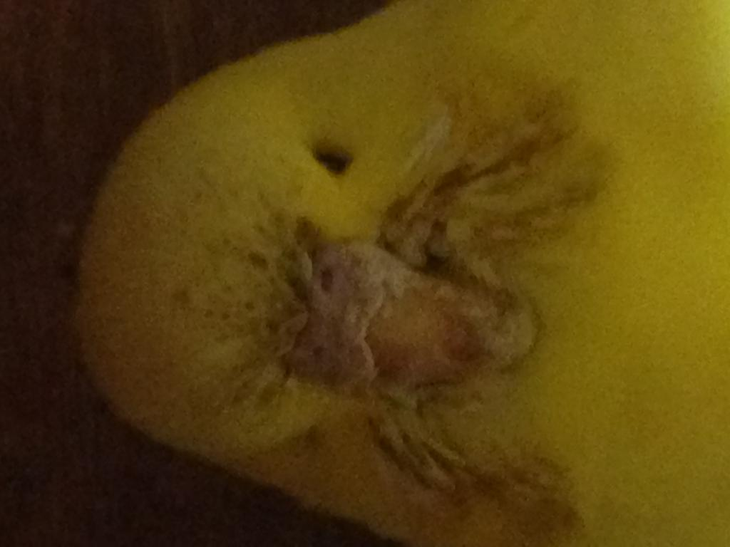 Notice an issue with budgies beak-img_0701.jpg