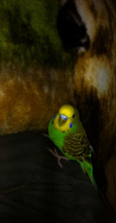 My Sweet Boy Tackett :)-img_0797.2014-02-04_010014.jpg