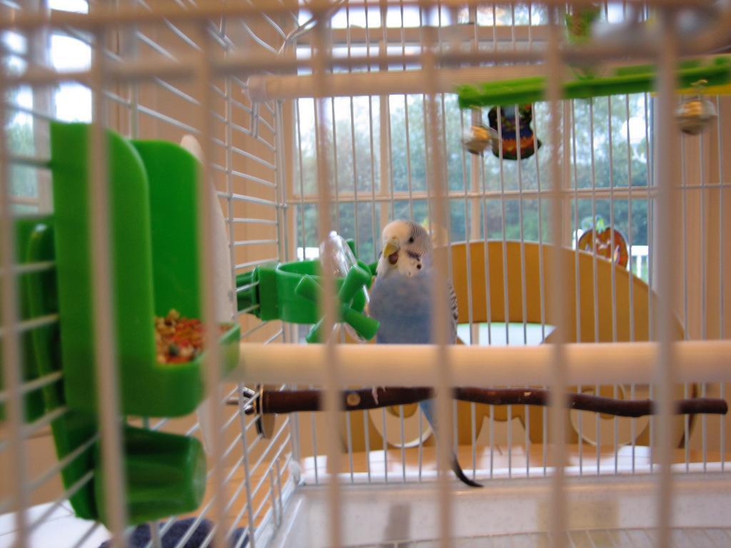 Gertie is flying free-img_0878.jpg