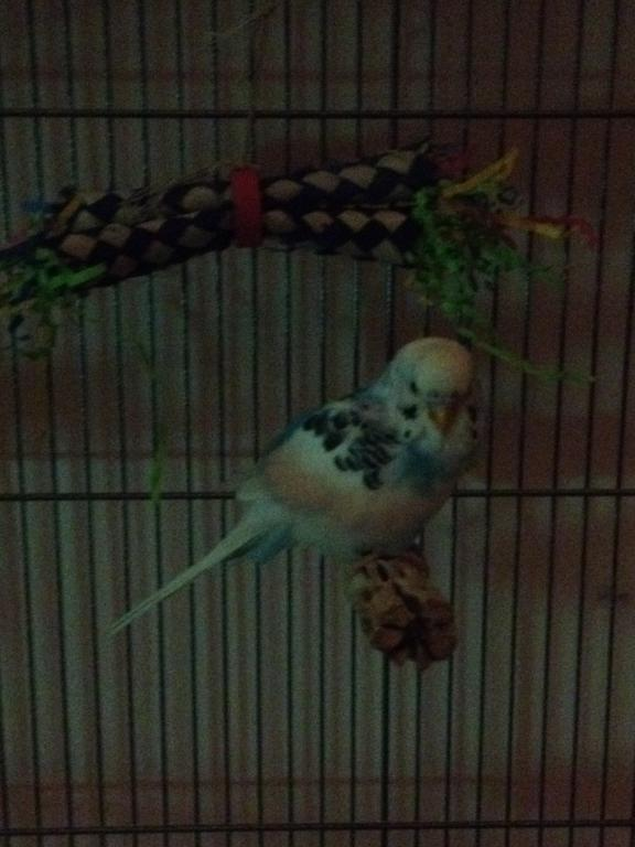 When you check on your birds at night-img_1266.jpg