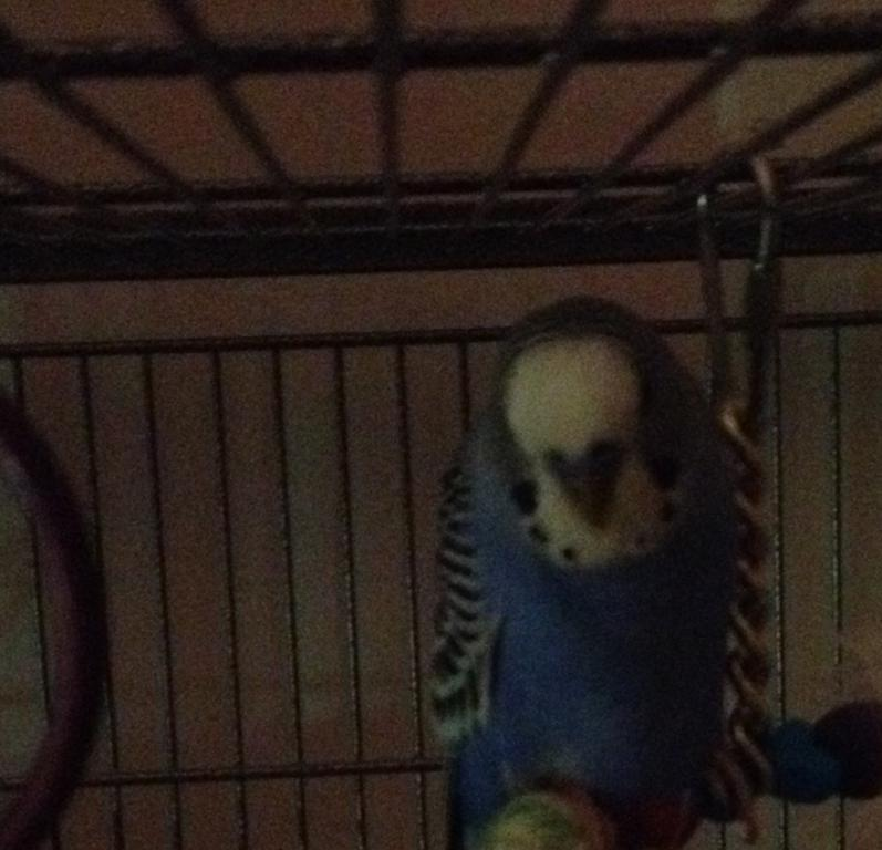 When you check on your birds at night-img_1267.jpg