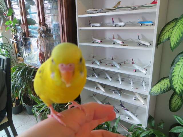Remember me?  I am still around with 14 Budgies too-img_1278.jpg