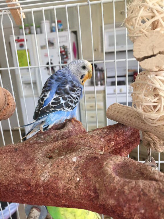 Is something wrong with my budgie?-img_1345.jpg