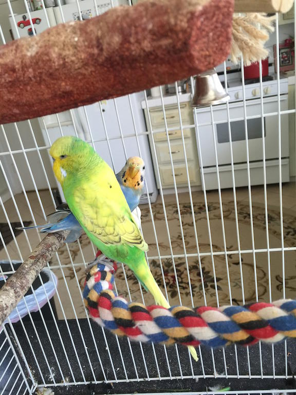 Is something wrong with my budgie?-img_1346.jpg