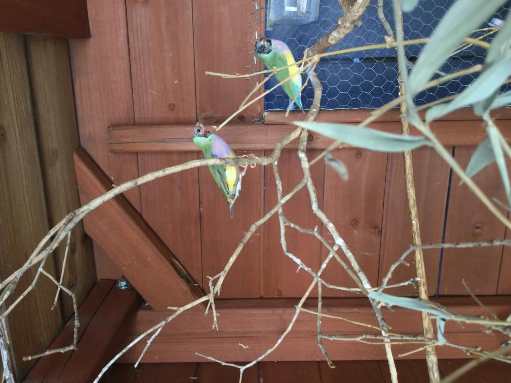 Attack on Aviary-img_1734.jpg