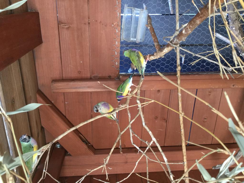 Attack on Aviary-img_1738.jpg