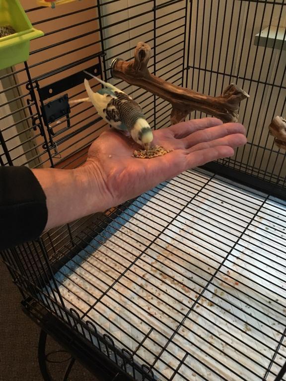 Birdie having a snack :)-img_1742.jpg