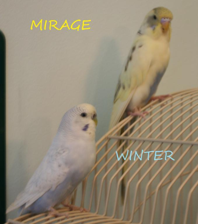 RIP Mirage-img_1786-2.jpg
