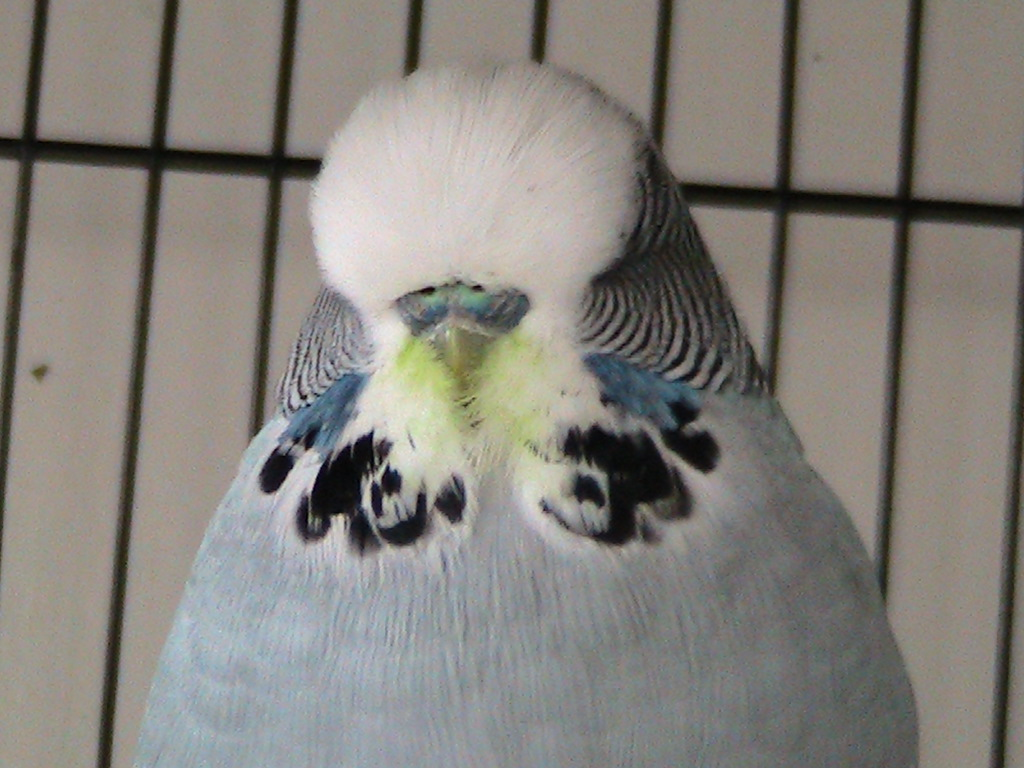 new mutation...spinach face grey cock :-P-img_1889.jpg