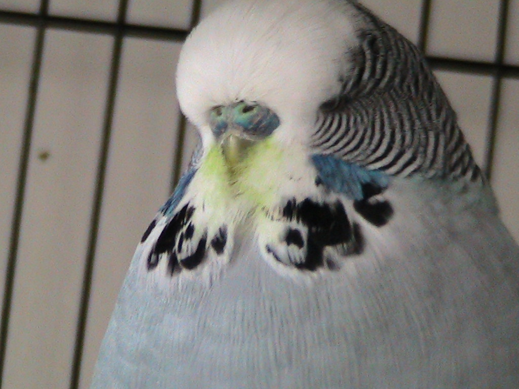 new mutation...spinach face grey cock :-P-img_1890.jpg