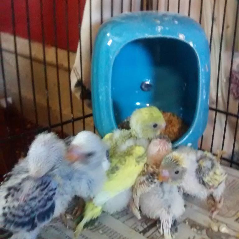 New owner! New babies!-img_20140521_200027.jpg
