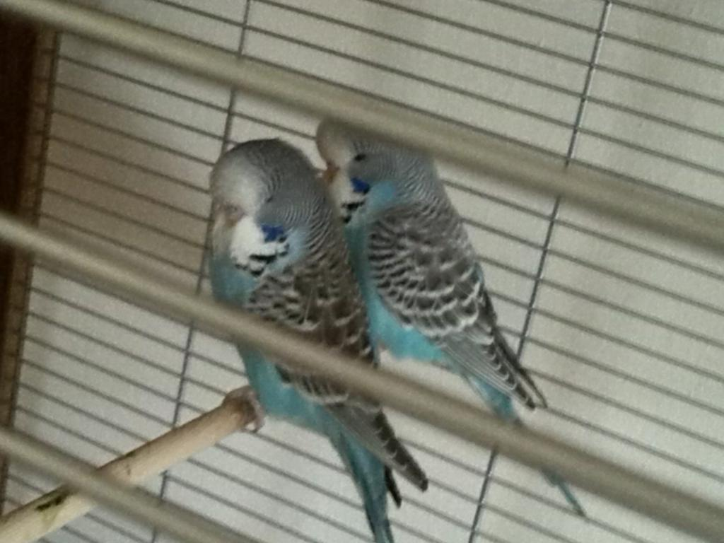 tweetstarters guys-img_20140810_135042.jpg