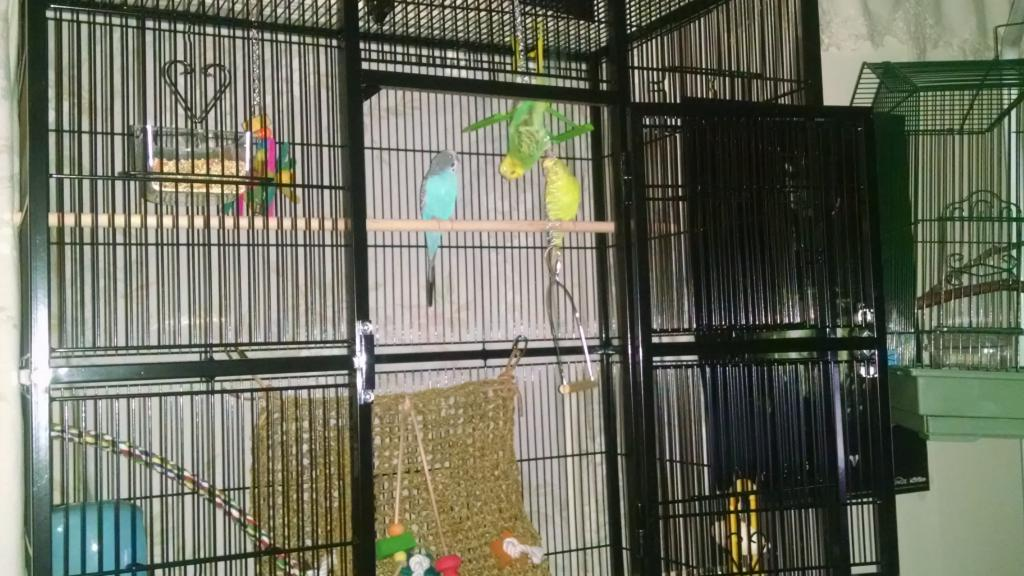 A question for budgie masters-img_20150121_171810006.jpg