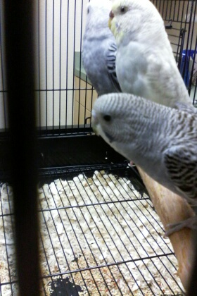 Pretty sure about Dusty, but Dawn's mutation(s) confuse me-img_20150715_190248.jpg