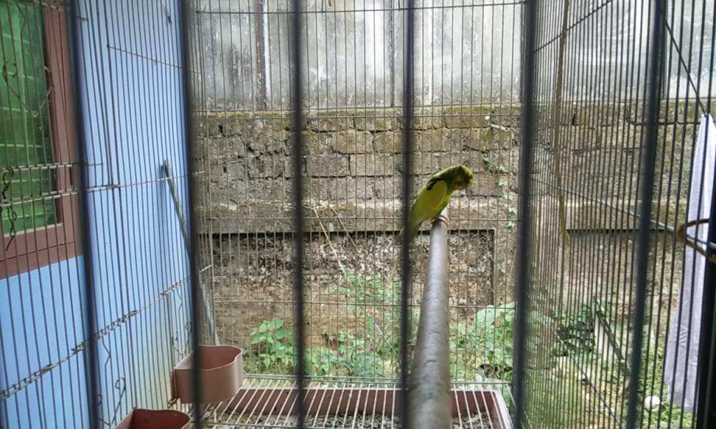 Need help for a sick budgie-img_20170222_150047.jpg