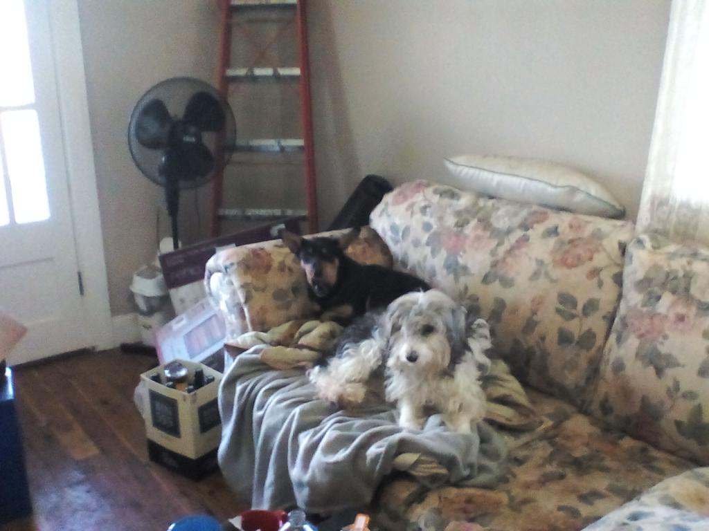 Our 2 dogs :)-img_20170505_161237.jpg
