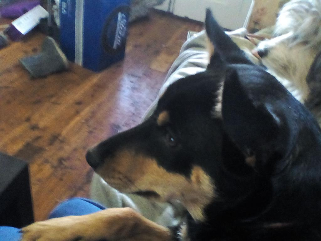 Our 2 dogs :)-img_20170505_161421.jpg
