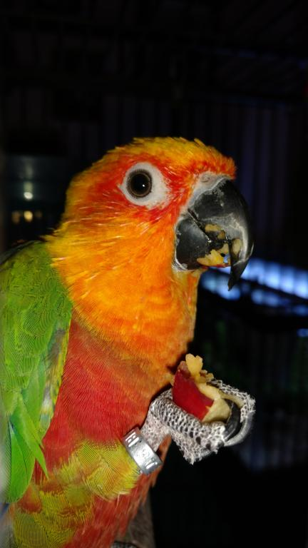 I got a jenday conure-img_20171126_142420448.jpg