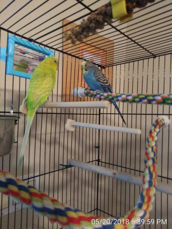 I want a bigger cage-img_20180520_183959.jpg