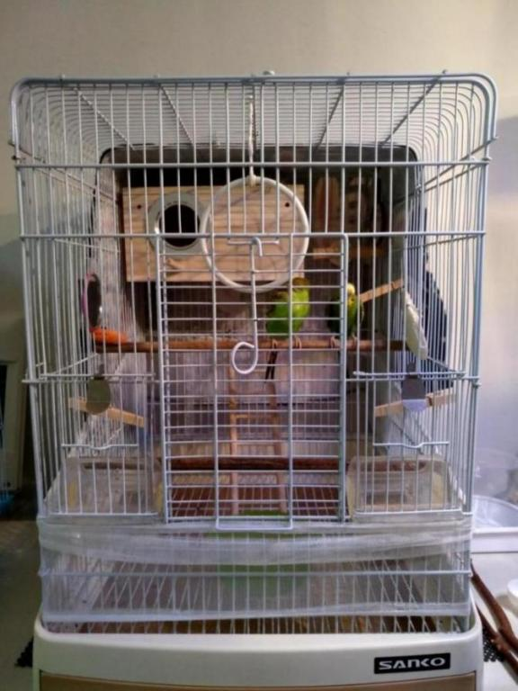Seeking opinion of my budgie cage set up-img_20180718_220702_hdr_1531931339687.jpg