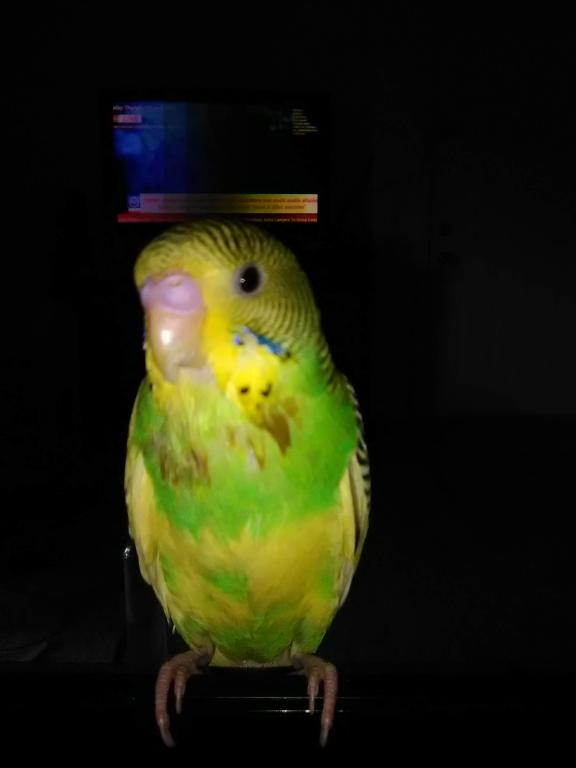 New Budgie Question-img_20190627_161416.jpg