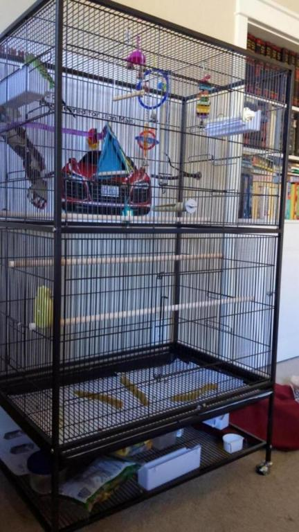 Budgies in a new cage.-img_20190724_103721_01_1563993786999.jpg