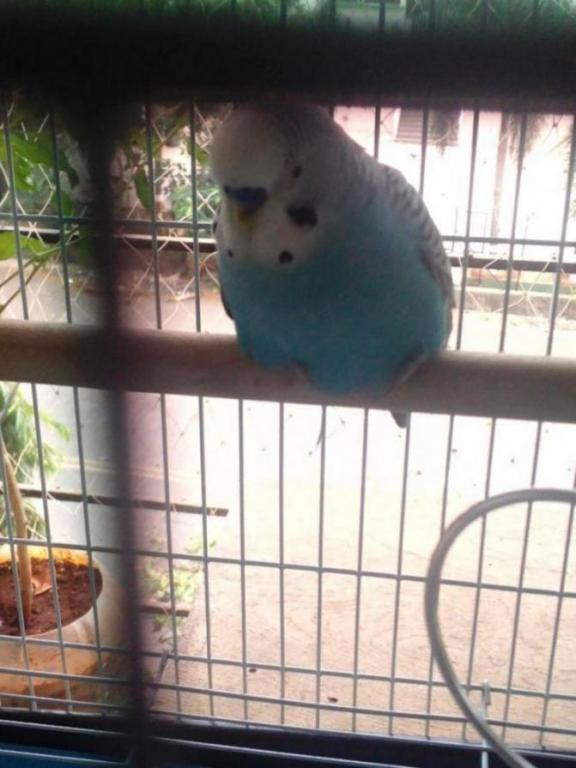 What is happening with my budgie suddenly?-img_20200602_102904_1591074896256.jpg