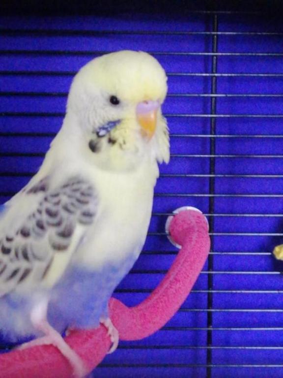 Male or Hen?-img_20200810_151343_1597072222570.jpg