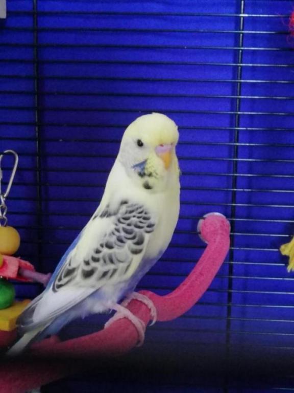 Male or Hen?-img_20200810_151400_1597072187511.jpg