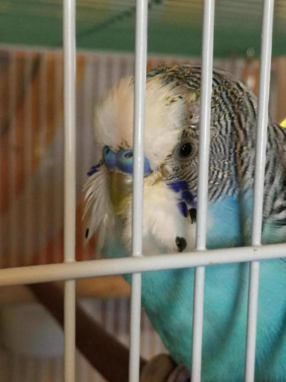 Perpetual molting and yellowed feathers-img_2317_1505421027091.jpg
