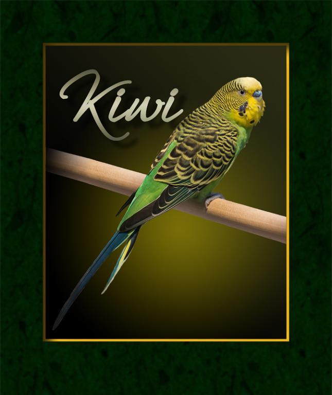 Photo of our new parakeet, Kiwi-img_2480-small.jpg