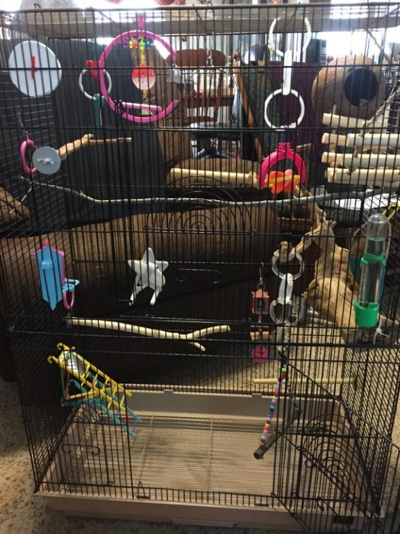 cage too full?-img_2647.jpg