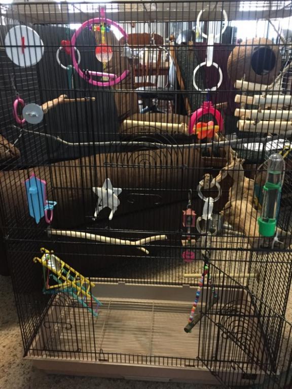 cage too full?-img_2648.jpg