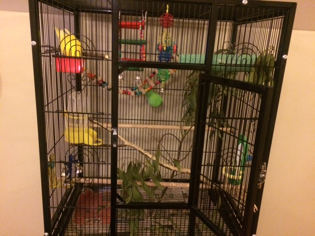 Current cage setup - advice please?-img_2651.jpg