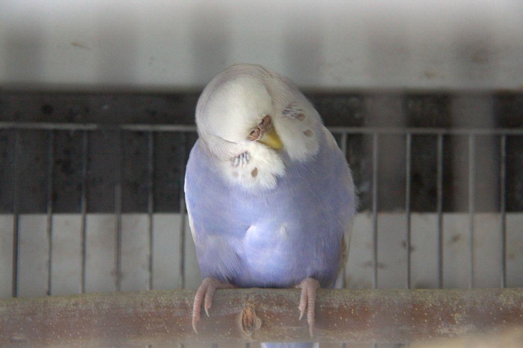 Sweety violet-img_3045r.jpg