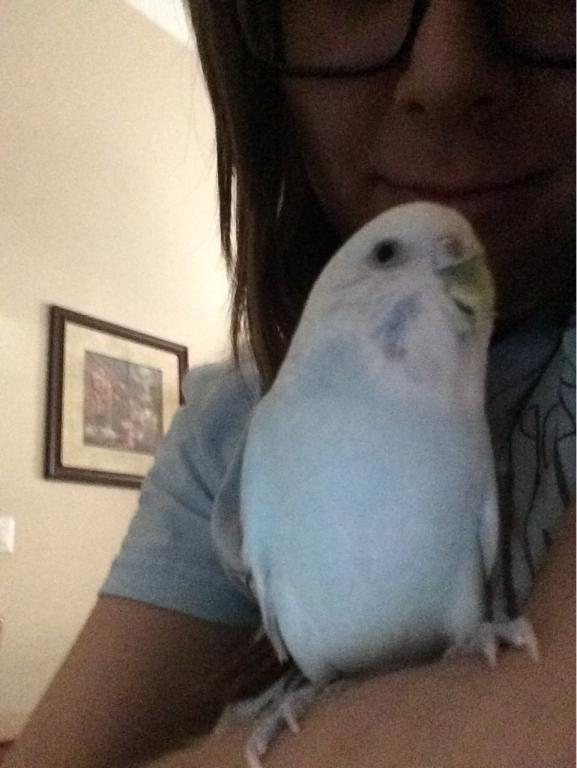 Unique Budgie Coloring-img_3108.jpg