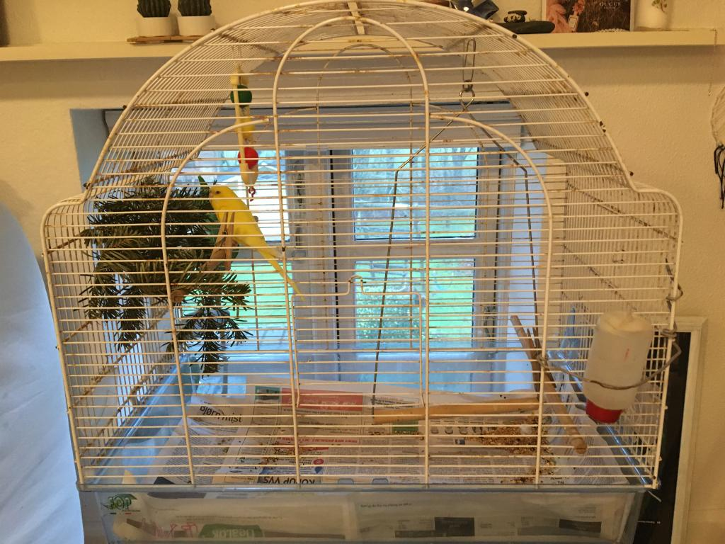 Assistance and Tips for Bonding with Older Budgie-img_3326.jpg