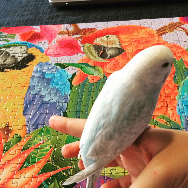 Unique Budgie Coloring-img_3489.jpg
