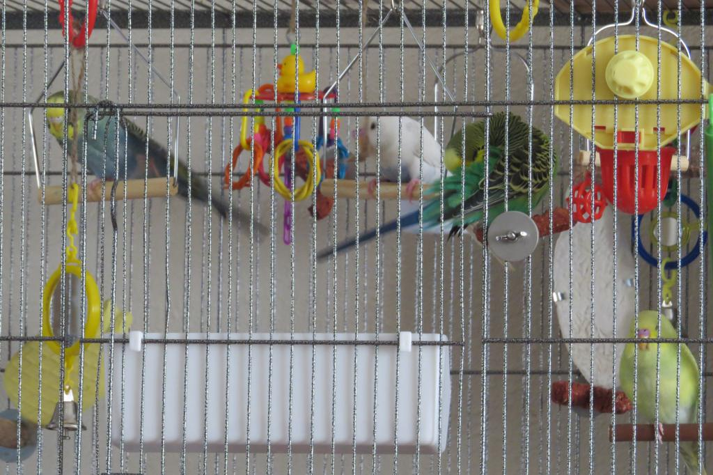 On going- My budgie Pictures-img_3777.jpg