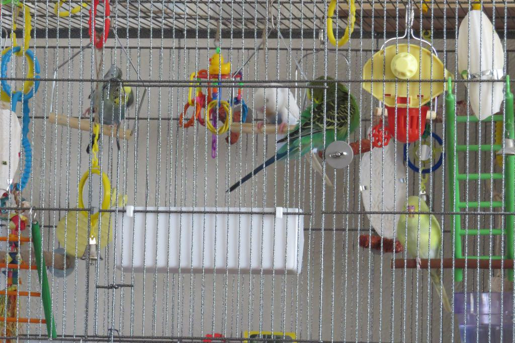 On going- My budgie Pictures-img_3778.jpg