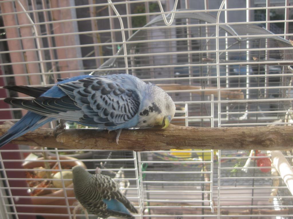The Flock-img_3936.jpg