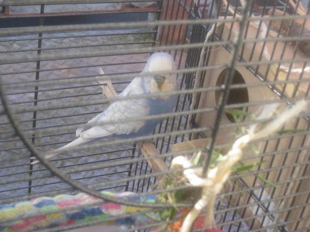 The Flock-img_3945.jpg