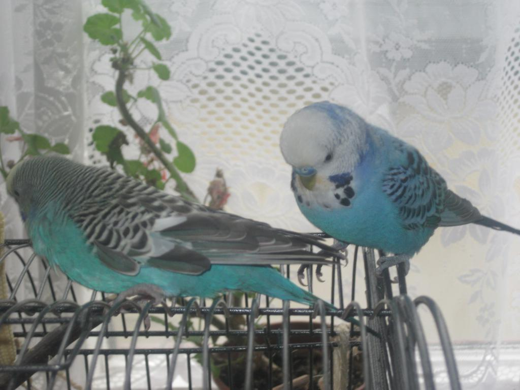Sky & Jessie-Blue go visiting-img_4008.jpg